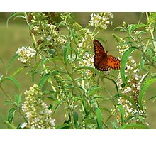 """A Butterfly Enjoying The Nectar Of A Flower"" Photographic Print"