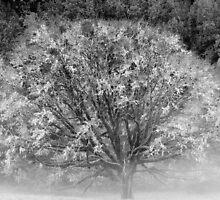 Tree, Mendocino County, California by Cathy P. Austin