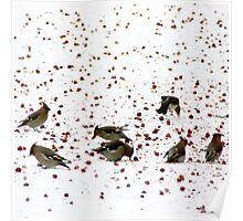 Waxwings lunch Poster