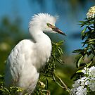 Snowy Egret by Delores Knowles
