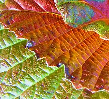 viburnum leaves at fall by ANNABEL   S. ALENTON