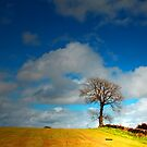 THE SUMMER TREE by leonie7