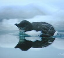 Baby's Reflection by Pam Moore