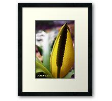 Radiant Skunk Framed Print