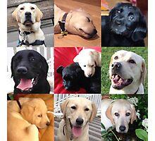 puppies Photographic Print
