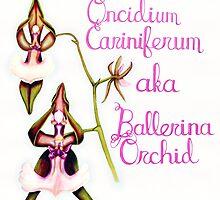 Ballerina Orchid (Wild Orchid Series II) by strangecharmart