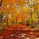Autumn by Beverly Lussier