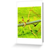 Irrigation Sitters Greeting Card
