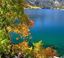 Aspens, Lake Sabrina by Rebecca Sowards-Emmerd