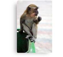 Macaque Monkey at Batu Caves Canvas Print