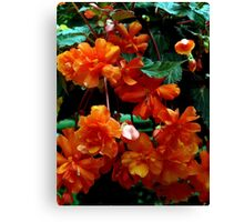 Begonia Cluster Canvas Print