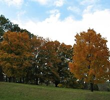 Fall 2009 - West Knoxville, Tennessee - 4 by © Bob Hall