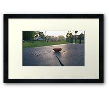 Macro Almond in Sunset Framed Print