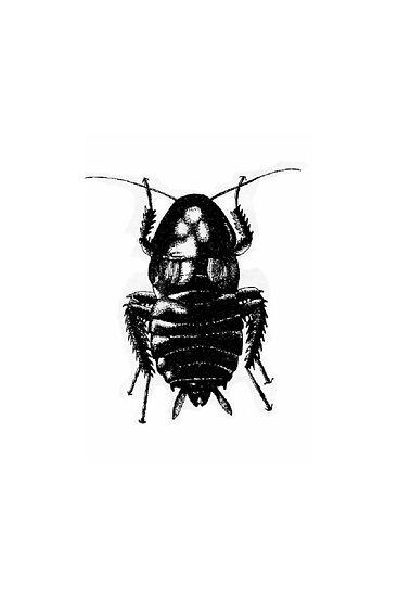 Blatella Orientalis, The Oriental Cockroach by Pete Janes