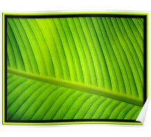 Tropical Green Poster