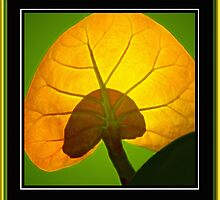 Beach Grape Leaf by George  Link