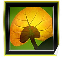 Beach Grape Leaf Poster