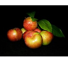 First Plums Photographic Print