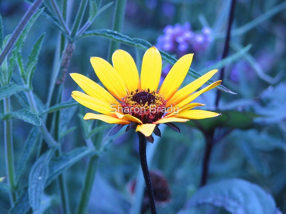 Yellow Flower by Sharon Brady