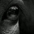 Pony Eye Black & White by Nick Pound