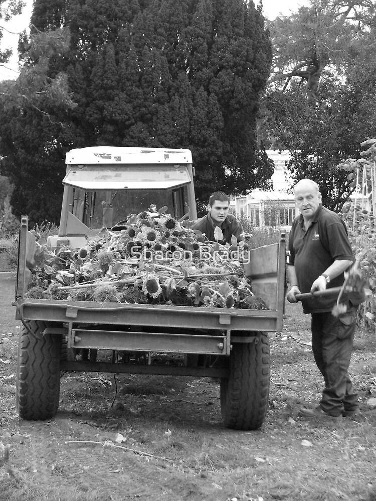 Sunflower Farmers. by Sharon Brady