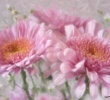 Pink Chrystanthemums 2 by Christopher Johnson