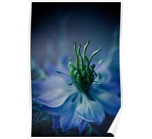 sunday in blue, surreal flower macro. Poster