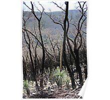 Bushfire regrowth, Wilsons Promontory NP Poster