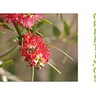 Bottlebrush Greeting Card by LynneHerry
