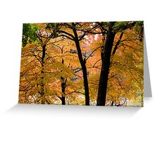 Seeing more fall Greeting Card