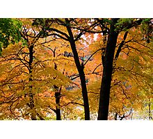 Seeing more fall Photographic Print