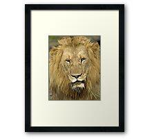 Close Up Lion Framed Print