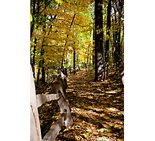 Path of fall Photographic Print