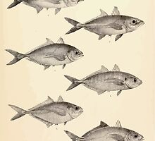 The fishes of India by Francis Day 047 - Caranx Chumenophthalmus, C Buops, C Dueddaba, C Aflinis, C Kalla, C Ire by wetdryvac
