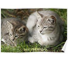 Best Friends, Tabby Kittens Poster