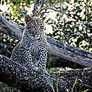 Bue Eyed Leopard Cub by Michael  Moss