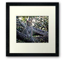 Bue Eyed Leopard Cub Framed Print