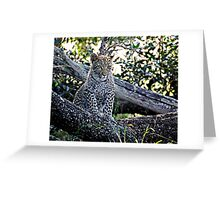 Bue Eyed Leopard Cub Greeting Card