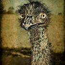 Mr Emu is a curious chap... by Rosemary Scott
