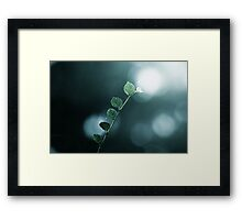 The leaf after the rain dropped Framed Print