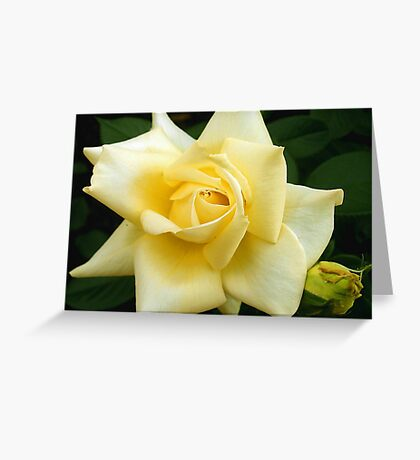 Brighten the Day Greeting Card