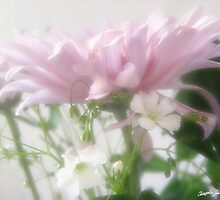 Pink Chrysanthemums 3 by Christopher Johnson