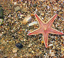 Starfish Beauty by Orla Cahill Photography