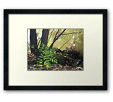 Foliage Along the Banks of The Seine Framed Print