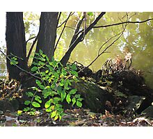 Foliage Along the Banks of The Seine Photographic Print