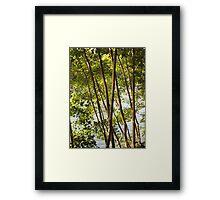 Trees - Linear pattern Framed Print