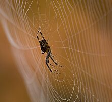 Home Sweet Home ~ Arachnid in Autumn by TeresaB