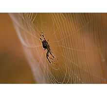 Home Sweet Home ~ Arachnid in Autumn Photographic Print