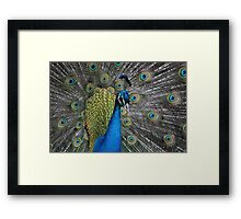 whos a pretty boy? Framed Print