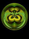 Moon Moth by owlspook